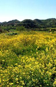Quelles fleurs causent des allergies ?