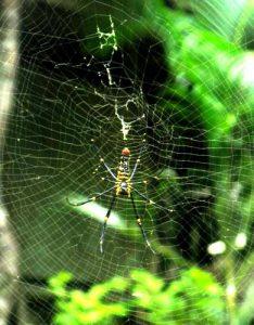 Protection contre les insectes dans les pays tropicaux