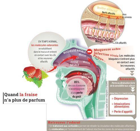 Quelles maladies la perte d'odorat indique-t-elle?