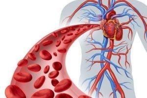 Sept façons d'augmenter le flux sanguin dans les jambes en 20 jours